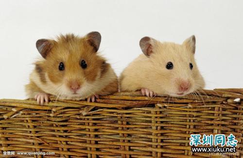 新研究让同性小鼠也能生育下一代